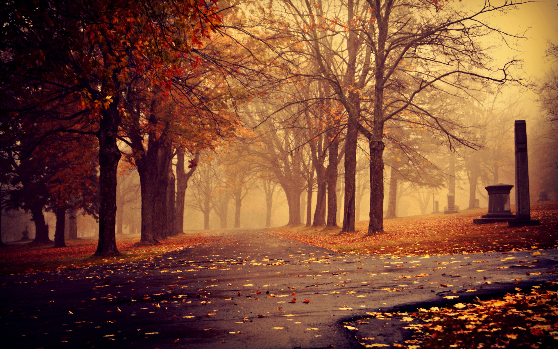 autumn-trees-park-paths-leaves-clouds-fog-city