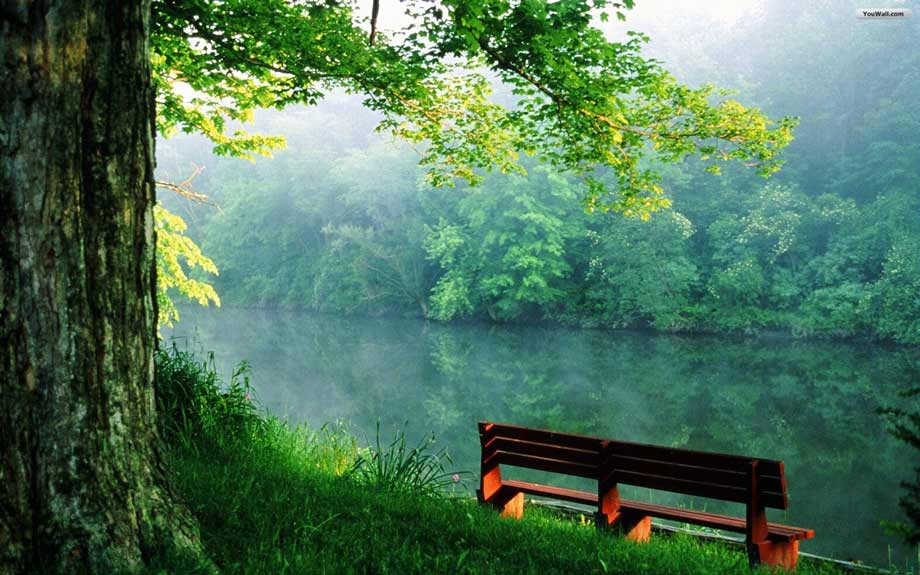 bench-by-the-river-wallpaper