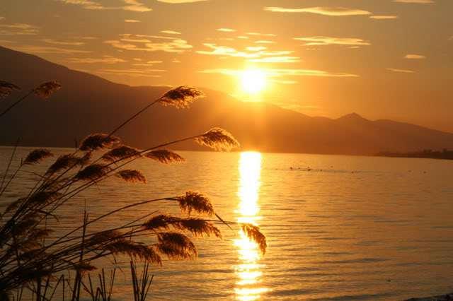 sunset-golden-path-reeds