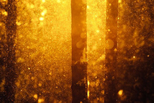 forest-gold-golden-light-snow-Favim.com-172351