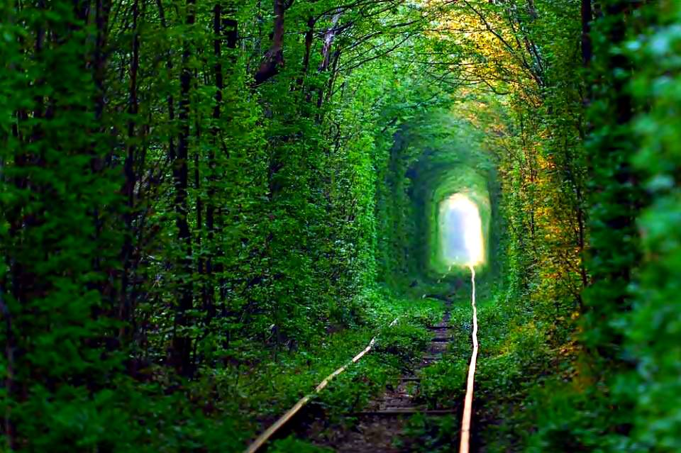 Tunnel-of-Love-Ukraine-This-tunnel-was-formed-over-many-years-as-trains-bustled-in-and-out-shaping-the-surrounding-trees.