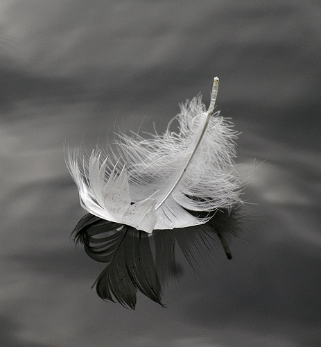 feather-on-water