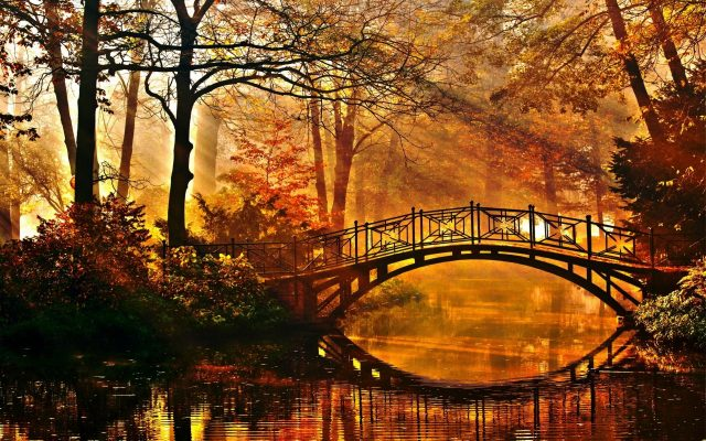 river-tree-bridge-nature-sun-park